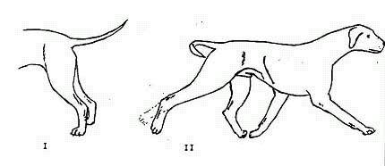 Бедра сильно развитые колени округлые хорошо сформированные скакательные суставы хорошо суставная гимнастика и маккохо в айкидо