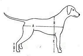 Пропорции собак рисунок